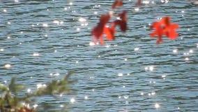 Autumn Red Oak Leaves, Blauwe Hemel op Meer Met platte kop WV stock video