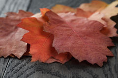 Autumn red oak leaves on old oak table Stock Photos