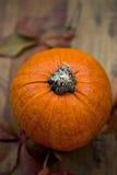Autumn red quirk pumpkin Stock Photos