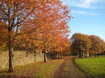 Autumn red trees and path covered in leaves Royalty Free Stock Photo