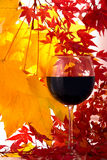 Autumn. Red Wine royalty free stock photos