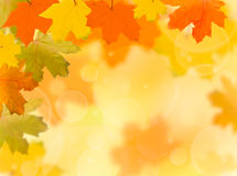 Autumn red and yellow leaves. Falling autumn red and yellow leaves on a blurred background Royalty Free Stock Image