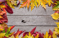 Autumn red and yellow leaves frame on rustic wood background. Autumn red and yellow rowan, aspen, maple and other leaves frame on rustic weathered old wood Stock Images