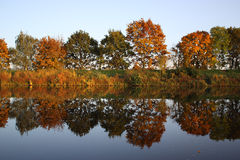 Autumn reflection. Autumn trees reflected on the water Royalty Free Stock Photo