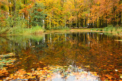 Autumn Reflection Foto de Stock Royalty Free