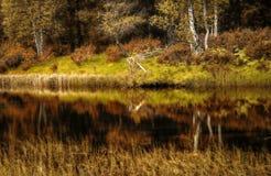 Autumn Reflection Fotografía de archivo
