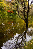 Autumn Reflection Royalty-vrije Stock Afbeelding