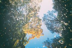 Autumn reflection Stock Photos