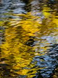 Reflection of yellow leaves Royalty Free Stock Photos