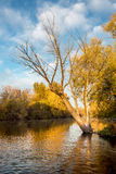 Autumn reflection in the Boise River. Old tree in the fall hanges over the Boise River Idaho stock photo