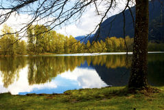Autumn Reflection on a Lake. Autumn Trees Reflecting on a Lake royalty free stock image