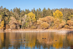 Autumn Reflection in Lake Royalty Free Stock Photography