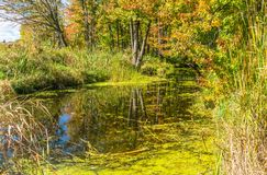 Autumn reflection landscape of forest and stream. stock images