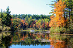 Autumn Reflection. With a mirror images on the water royalty free stock image