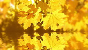 Autumn reflection Royalty Free Stock Photography