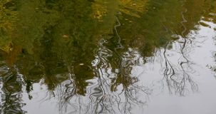 Autumn. Reflection of trees in water stock video