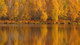 Autumn - reflection of the trees in the water Stock Photography