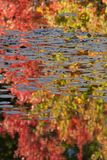 Autumn reflections Royalty Free Stock Image
