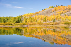 Autumn Reflections. Vivid autumn colors reflecting in Wyoming's Snake River at Oxbow Bend stock image