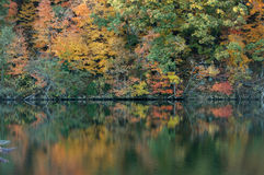 Autumn reflections... Reflections of vibrant fall foliage (autumn trees) on a lake. Cheat lake, west virginia, USA Royalty Free Stock Photos