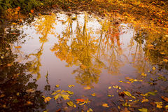 Bright Autumn Trees Reflected in Puddle 2 Stock Photos