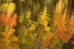 Autumn reflections. Autumn trees reflected on the water Royalty Free Stock Photography