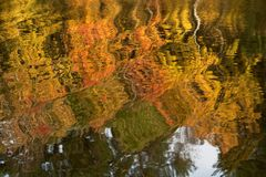 Autumn reflections. Autumn trees reflected on the water Royalty Free Stock Image