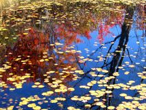Autumn Reflections. In a lake in the Muskoka region of Ontario, Canada Royalty Free Stock Photography