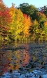 Autumn Reflections Fotografering för Bildbyråer