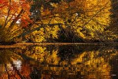 Autumn Reflections da árvore na água Fotografia de Stock Royalty Free