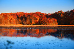 Autumn reflections Royalty Free Stock Photo