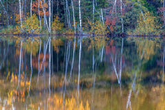 Autumn reflections of a forest Stock Image