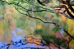 Autumn reflections Stock Photography