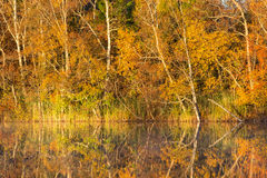 Autumn Reflections in a lake Stock Image