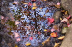 Autumn reflections stock images