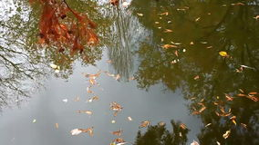Autumn reflections. Reflection of trees in water with autumn leaves stock video