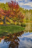 Autumn Reflections on River. Beautiful fall colours on this old leaning tree on the river Royalty Free Stock Photo