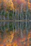Autumn Reflections Scout Lake Royalty Free Stock Photography
