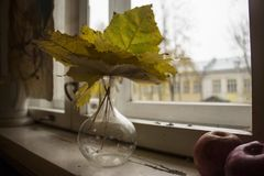 Autumn reflections. unrequited love. royalty free stock photography
