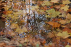 Autumn reflections in water. A reverse reflection of trees can be seen in the leaf filled creek at Mingo Creek Park, Washington County Pennsylvania Stock Image