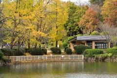 Autumn Reflections in Yokohama, Japan Royalty Free Stock Images