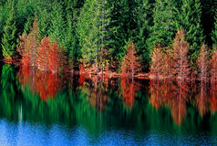 Autumn reflecton Royalty Free Stock Photos