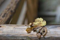 Autumn Regards Stock Images
