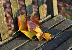 Autumn Rest. Autumn leaves on a park seat Royalty Free Stock Photography