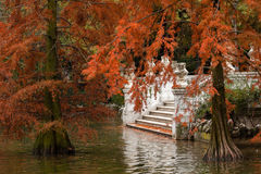 Autumn in the Retiro Park in Madrid Stock Images