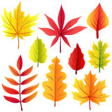 Autumn retro leaves set Royalty Free Stock Photo