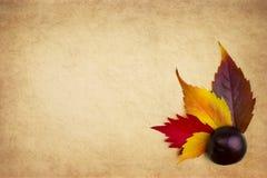Autumn Retro Set Background lizenzfreie stockfotos