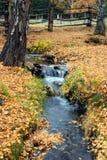 Autumn Rhythm Royalty Free Stock Image
