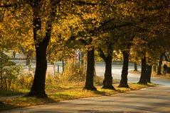 Autumn rhythms Stock Image