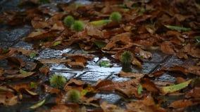 Autumn rian falling stock video footage